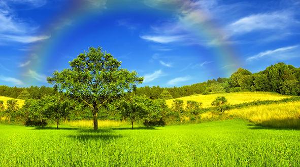 Обои Красивая радуга в голубом небе над лесом и лугами