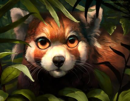 Обои Красная панда в листьях, by rajewel