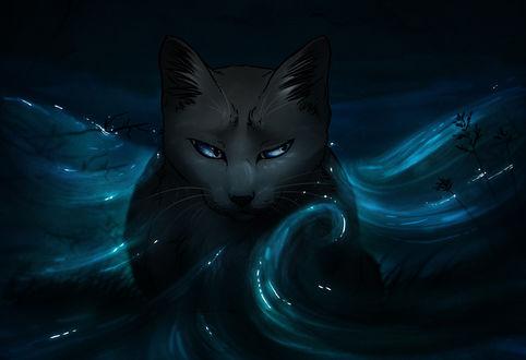 Обои Черный кот лежит в воде, by Octobertiger