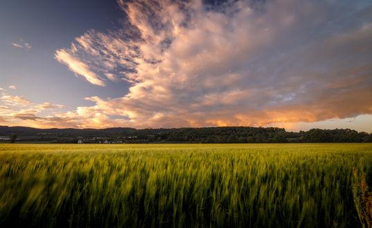 Обои Зеленое поле под облачным небом, by TheChosenPesssimist