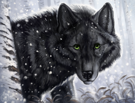 Обои Портрет черного волка с зелеными глазами на фоне снега, by FlashW
