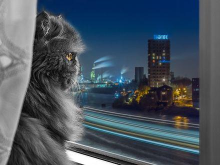 Обои Персидский кот сидит на подоконнике и смотрит на ночной город за окном
