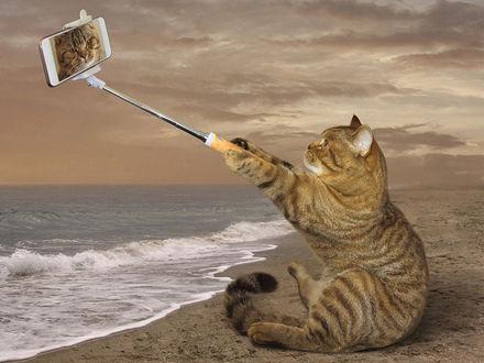 Обои Кот делает селфи, сидя на берегу моря