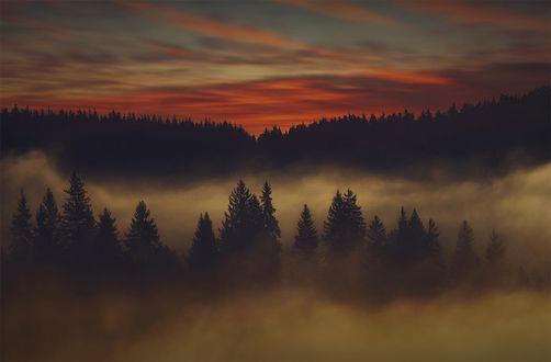 Обои Лес в тумане под багряным небом, фотограф hmetosche