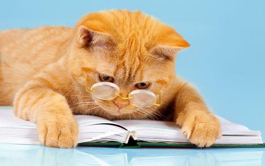 Обои Забавный рыжий кот в очках лежит на книге с умным видом