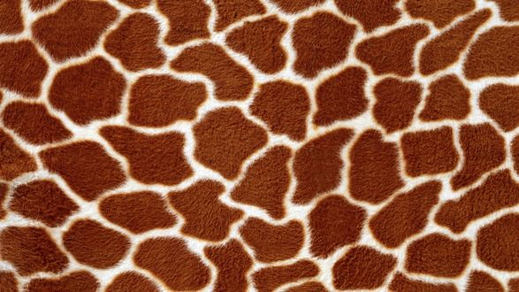 Обои Текстура кожа жирафа