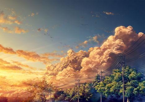 Обои Облака над деревьями