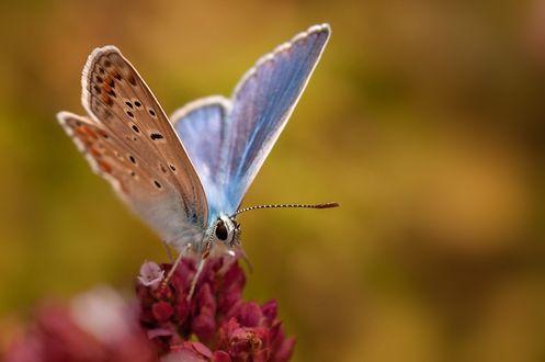 Обои Бабочка на цветке, фотограф Thomas Ruf