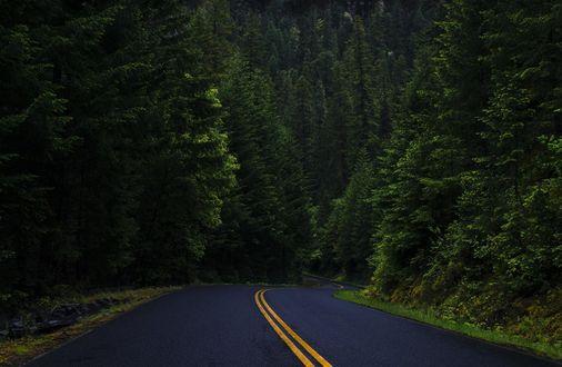 Обои Дорога в лесу, фотограф Pallav Vyas