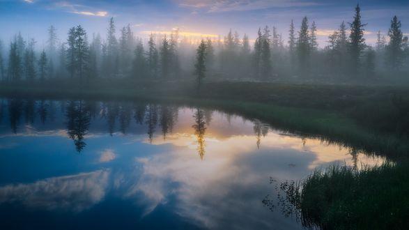 Обои Раннее таежное утро, небольшой лес, окутанный туманом у реки, полуостров Ямал, июль 2015, фотограф Камиль Нуреев