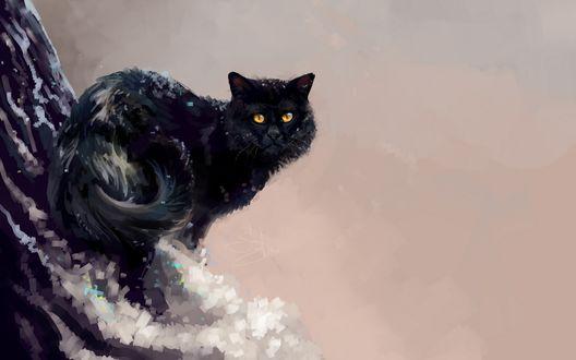 Обои Черный кот на заснеженном дереве, by SalamanDra-S