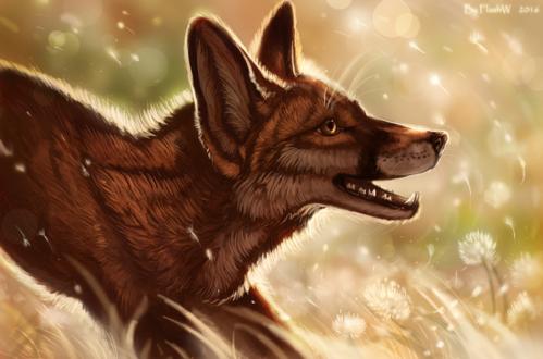 Обои Портрет лиса на фоне природы, by FlashW