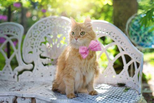 Обои Кошка с розовым бантом сидит на садовом диване, на размытом фоне сада