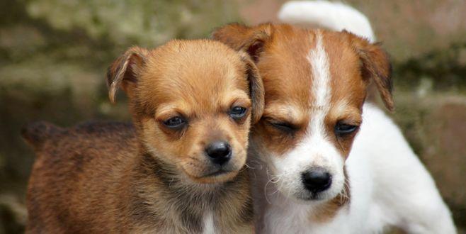 Обои Два щенка на размытом фоне