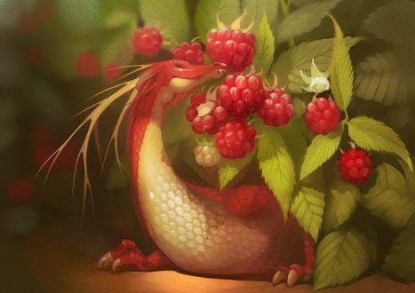 Обои Милый дракончик у малины