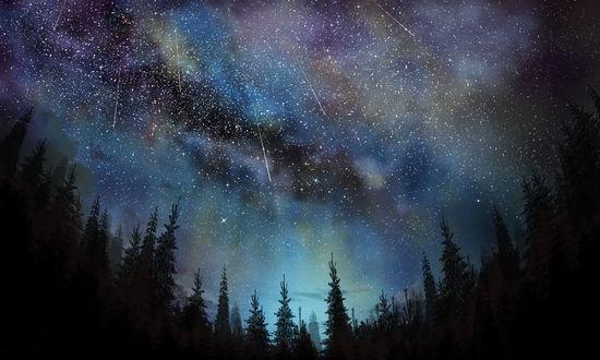Обои Ели на фоне ночного неба и падающих звезд