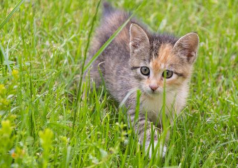 Обои Котенок в траве. Фотограф Цветан Ганев