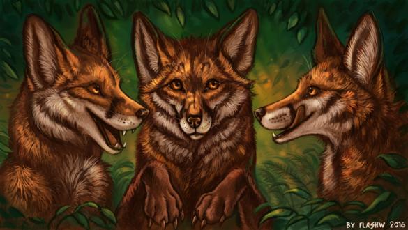 Обои Три лисицы на фоне природы, by FlashW