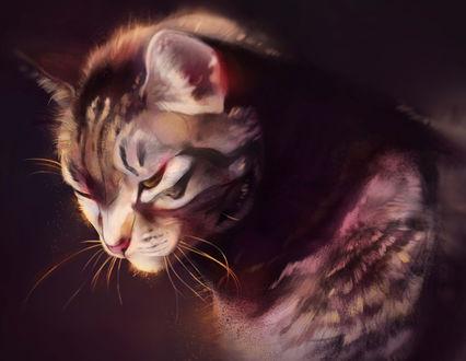 Обои Рисованный полосатый кот