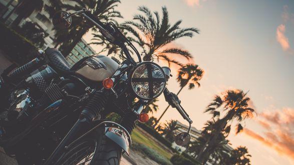 Обои Мотоцикл стоит на парковке на фоне вечернего неба и пальм