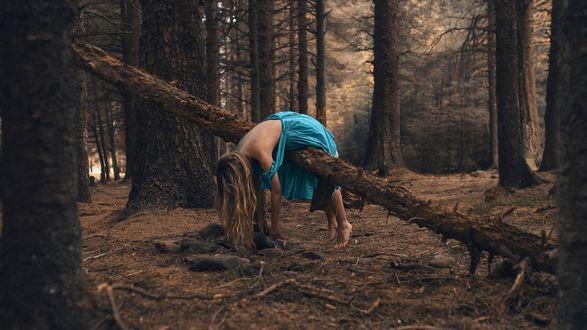 Обои Девушка в голубом платье лежит на сломанном дереве, фотограф Rosie Hardy