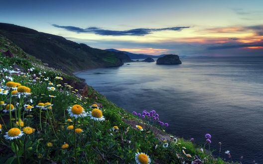 Обои Цветущие ромашки на холме возле моря на фоне закатного неба