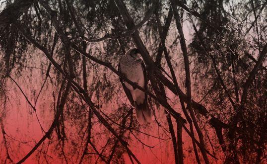 Обои Птица среди сухих веток на размытом красноватом фоне