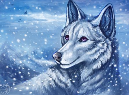 Обои Белый волк с сиреневыми глазами на фоне снега, by FlashW