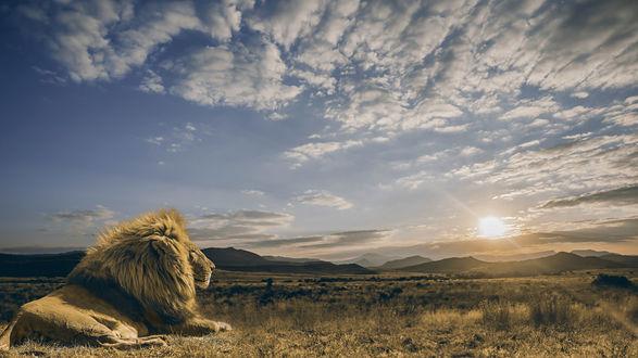 Обои Лев лежит на земле и смотрит на восходящее солнце