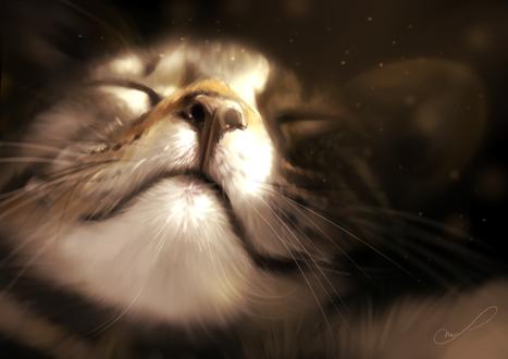 Обои Портрет спящего котика, by Martith