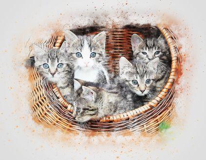 Обои Котята в корзинке на размытом фоне, стилизация под акварель