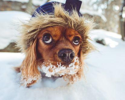 Обои Щенок, играющий в снегу