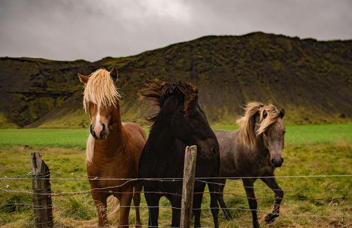 Обои Тройка лошадей на траве загона, на фоне гор и неба