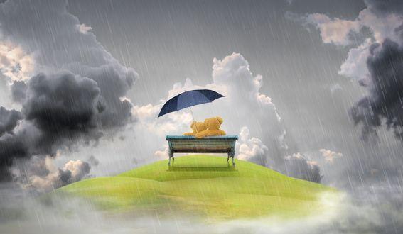 Обои На скамейке под дождем, прижавшись друг к другу, сидит парочка игрушечных мишек под одним зонтом