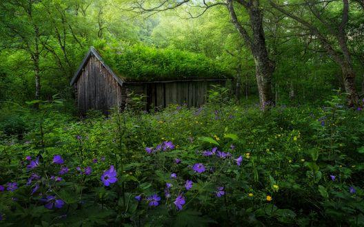 Обои Маленький домик в лесу, заросший мхом, фотограф Haakon Nygaard