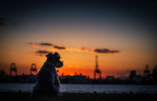 Обои Закат солнца, собака сидит у реки