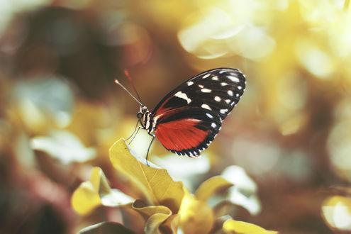 Обои Бабочка сидит на листке