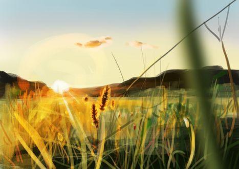 Обои Трава освещается утренним солнцем