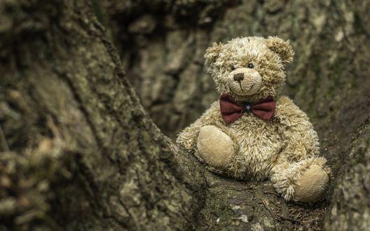 Обои Плюшевый медвежонок на дереве