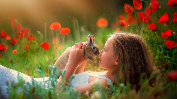 Обои Девочка с кроликом лежит на маковом поле
