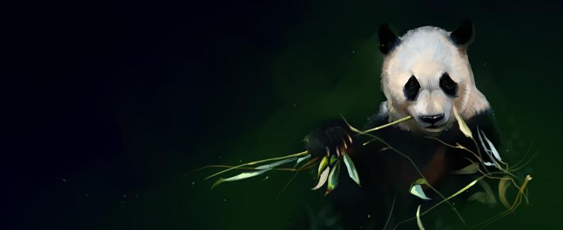Обои Панда с листьями и бамбуком на зеленом фоне, by SalamanDra-S