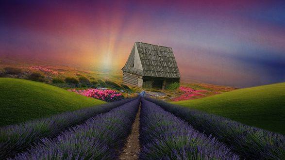 Обои Деревянный заброшенный домик посреди лавандового поля и розовых цветов