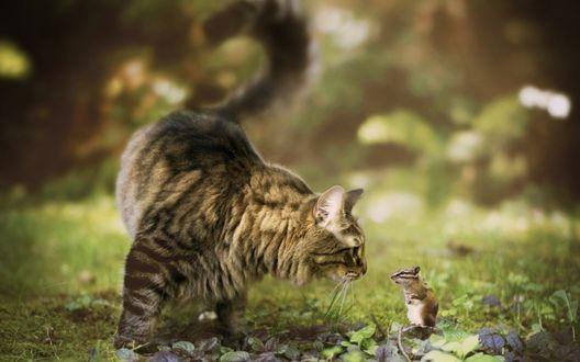 Обои Большой пушистый полосатый кот и маленький бурундук знакомятся в саду, освещенном солнцем