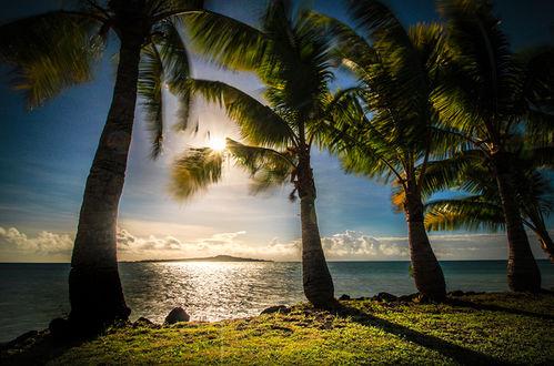 Обои Пальмы на тропическом побережье океане в предзакатном освещении заходящего солнца