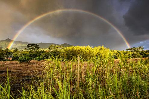 Обои Грозовое небо с радугой в тропиках Маврикии