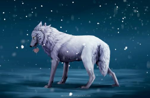 Обои Белый волк с цветком в пасти на фоне снега, by MarieRock