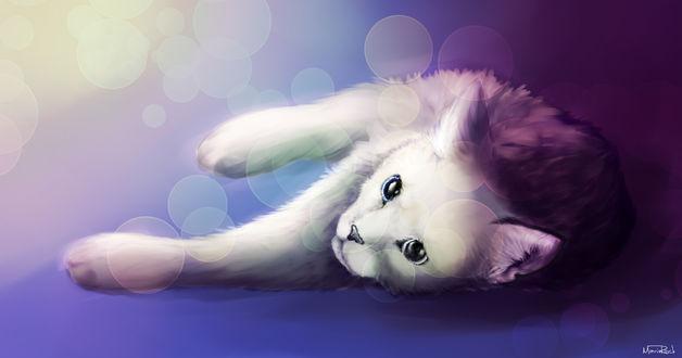 Обои Белая кошечка на фоне бликов, by MarieRock