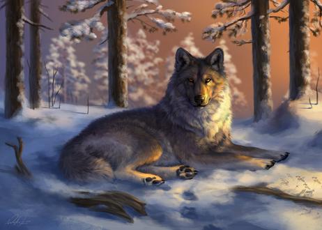 Обои Лежащий на снегу серый волк, by Wolnir
