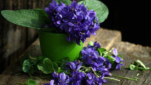 Обои Голубые цветы в горшочке и рядом на досках