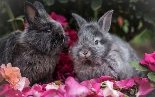 Обои Пушистые кролики сидят среди лепестков роз, фотограф Alex Blаjan